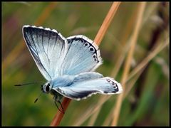 Ein Blaues