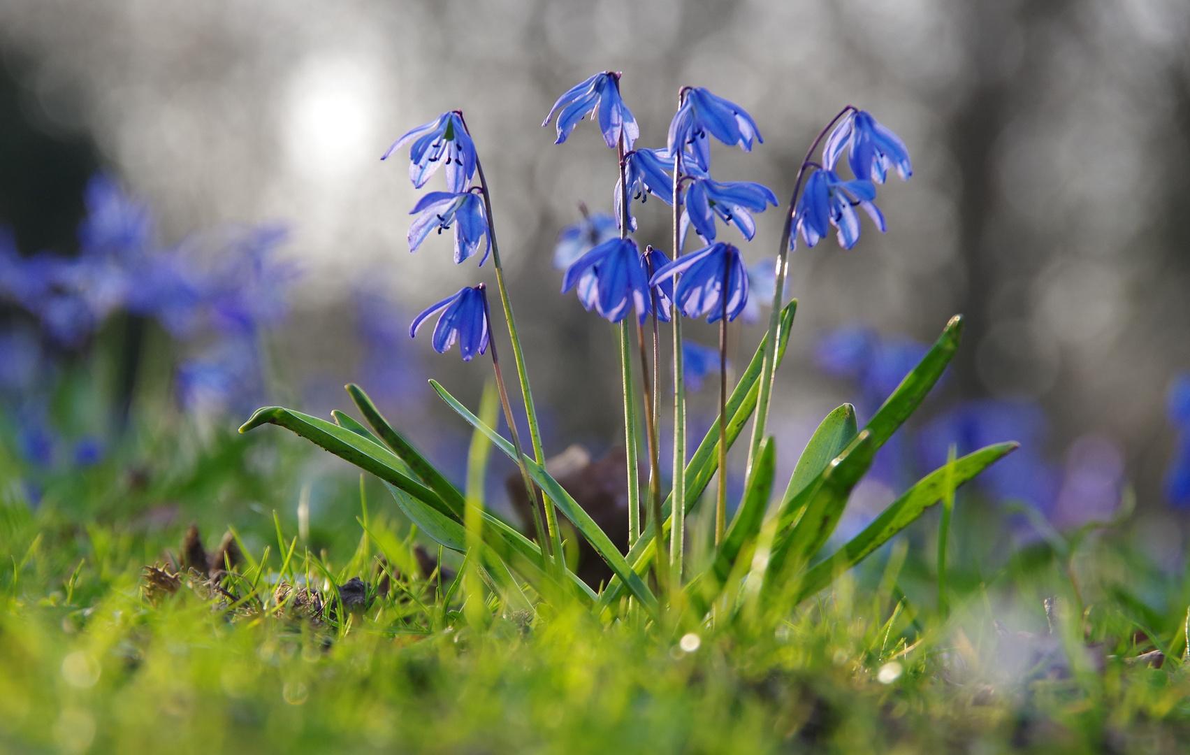 Ein blaues Wunder erleben