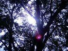 Ein Blick durch den Baum zur Sonne