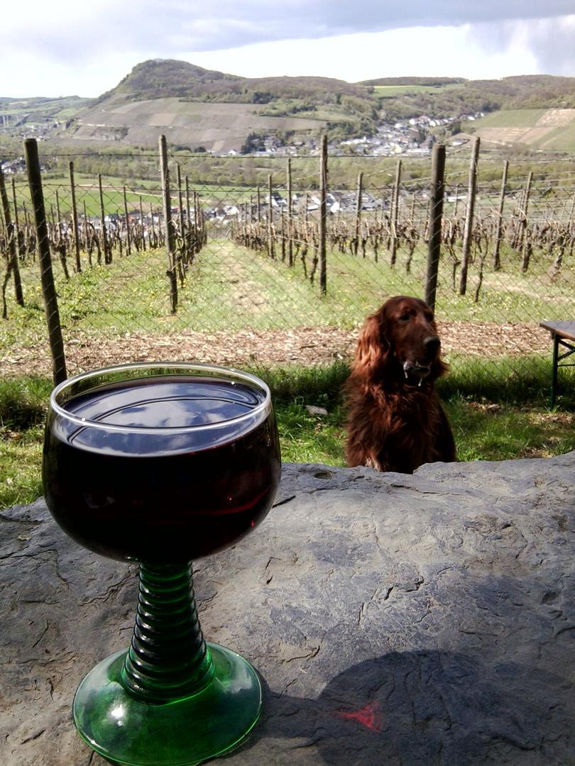 Ein Blick durchs Weinglas