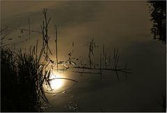 Ein Blick in die Oder ...