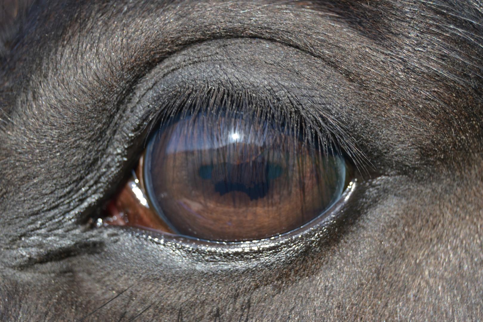 Ein blick in die Seele des Pferdes