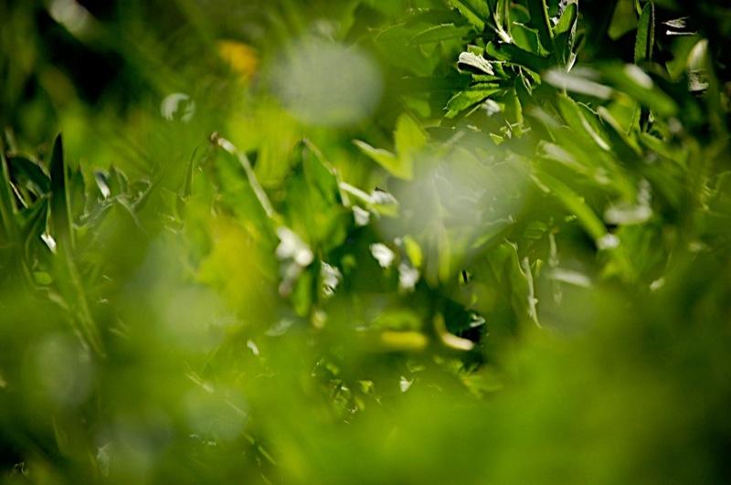 Ein Blick ins Grüne