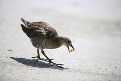 Ein blindes Huhn..