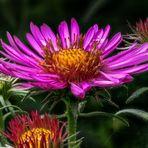 Ein Blühhotspot in unserem Garten