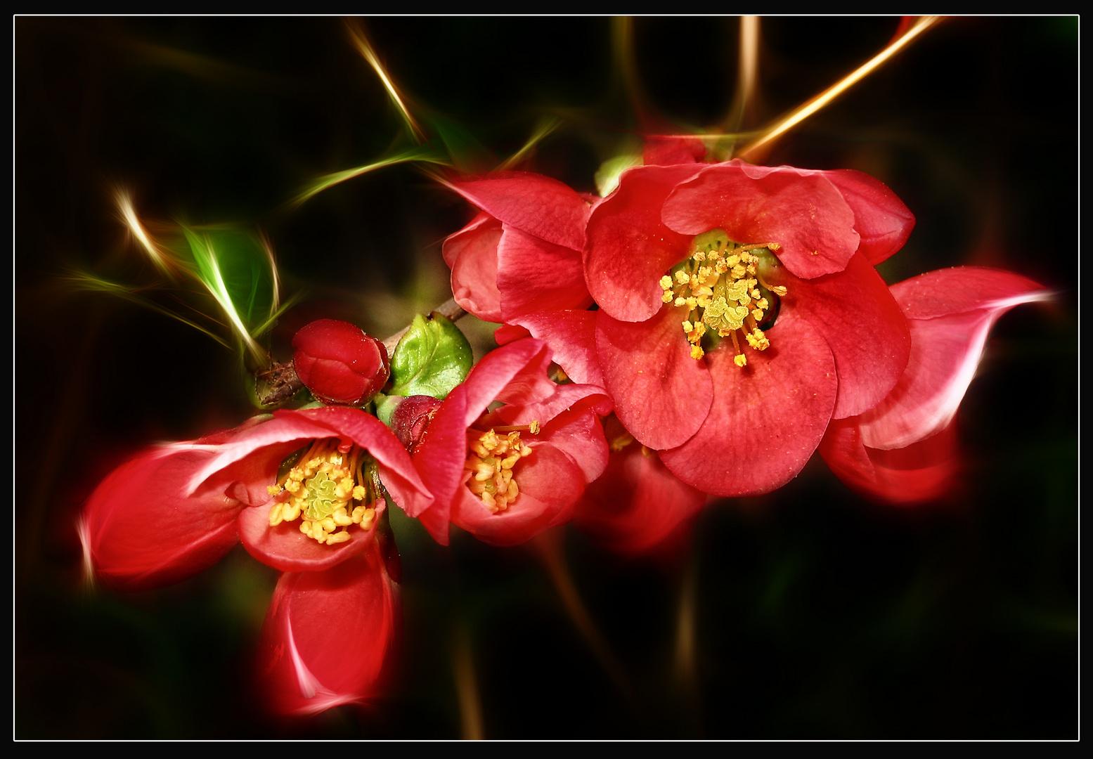 Ein Blütenfest
