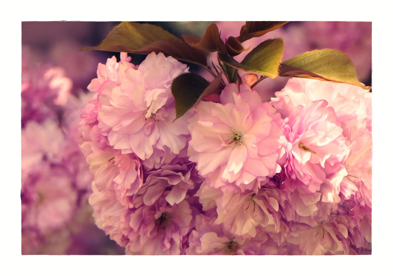 ein Blütengruß...