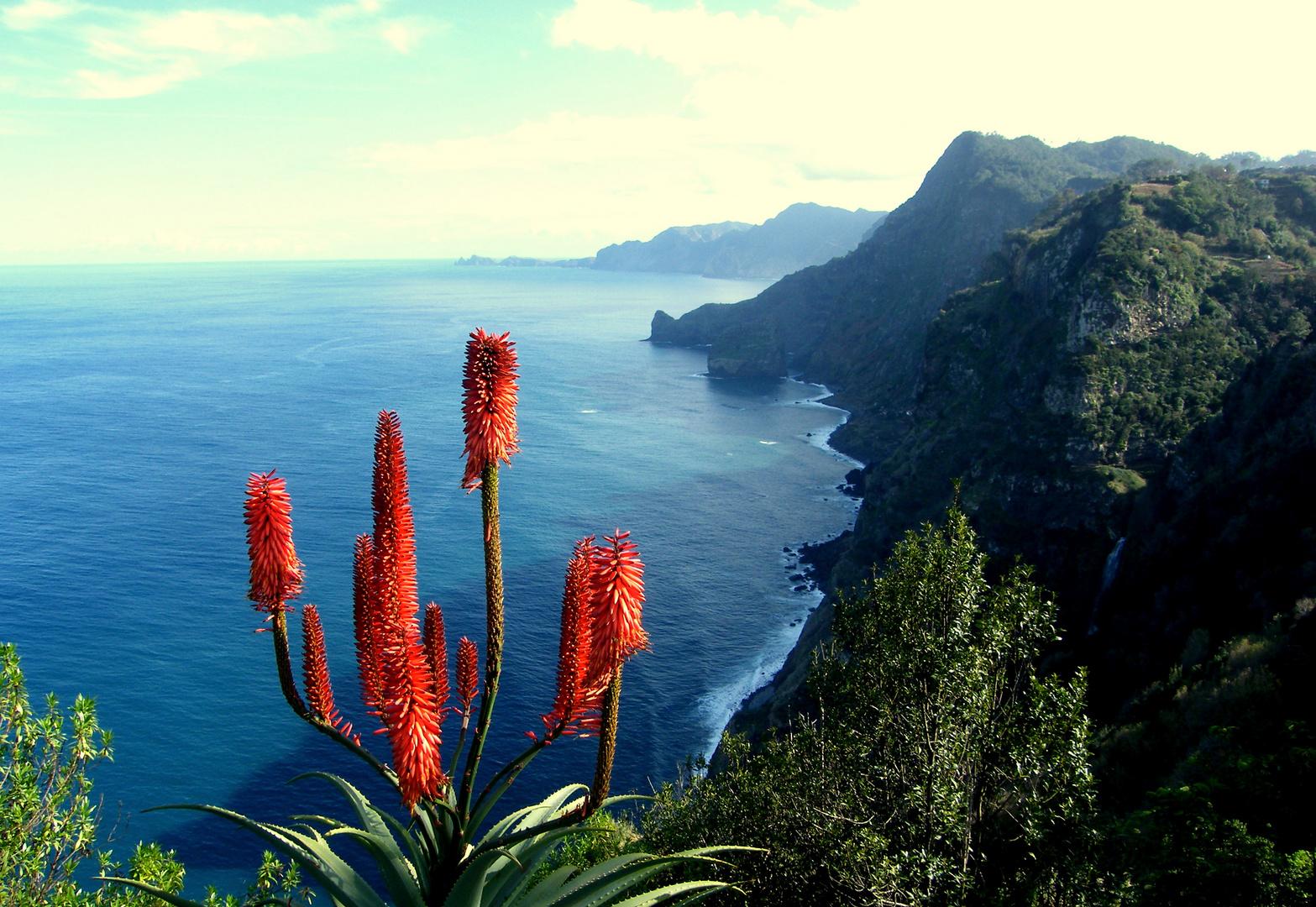 ein Blütengruss über das Meer