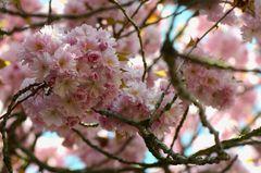 - Ein Blütenmeer -