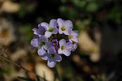 Ein Blütensträusschen