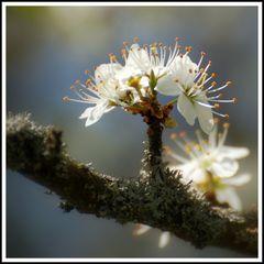Ein Blütenstrauß