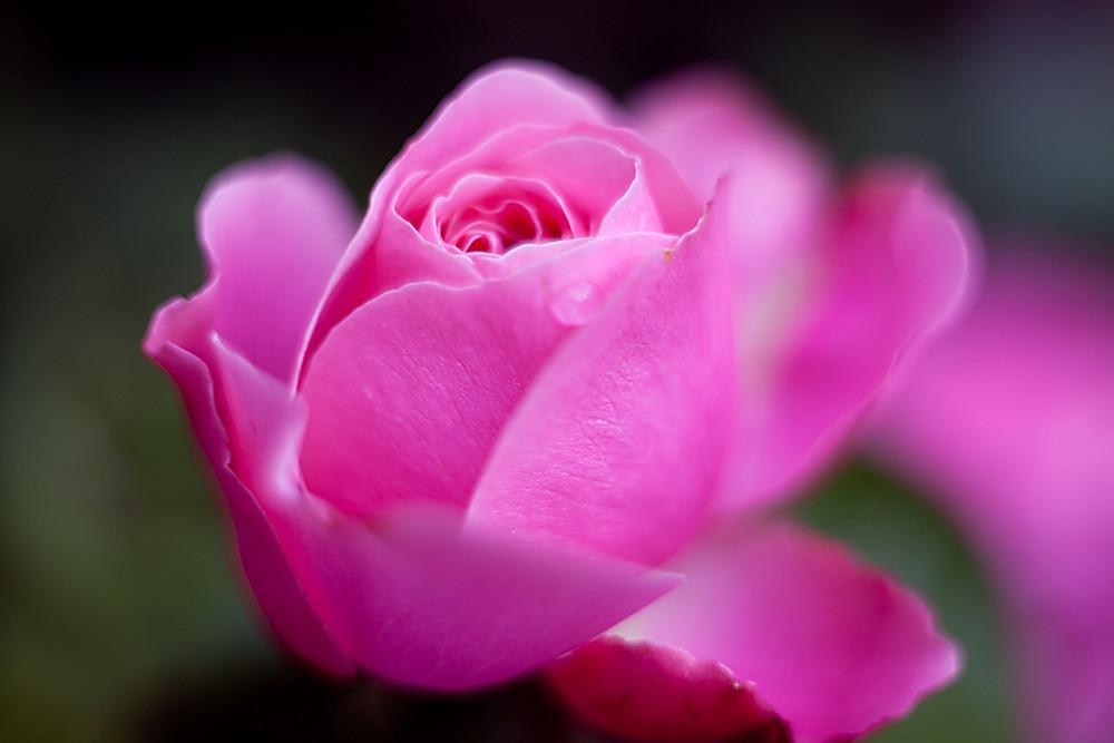 Ein Blütentraum