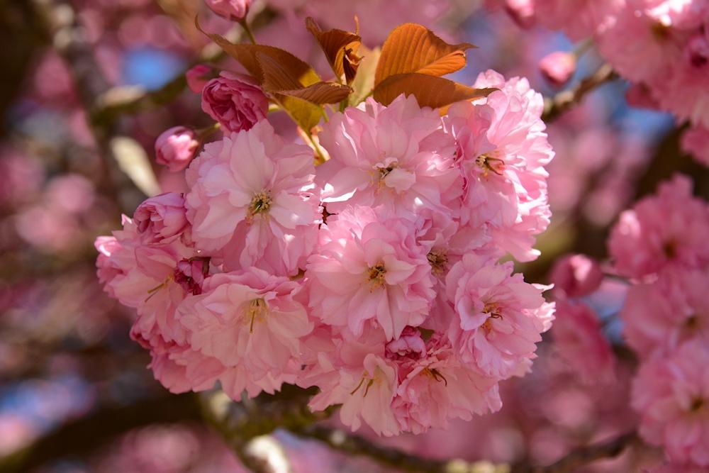 ein Blütenzauber...