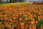 ein Blumen Meer vor dem historischen Schloß
