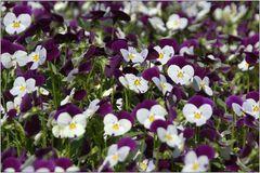 ... ein Blumenbeet für Edeltrud ...