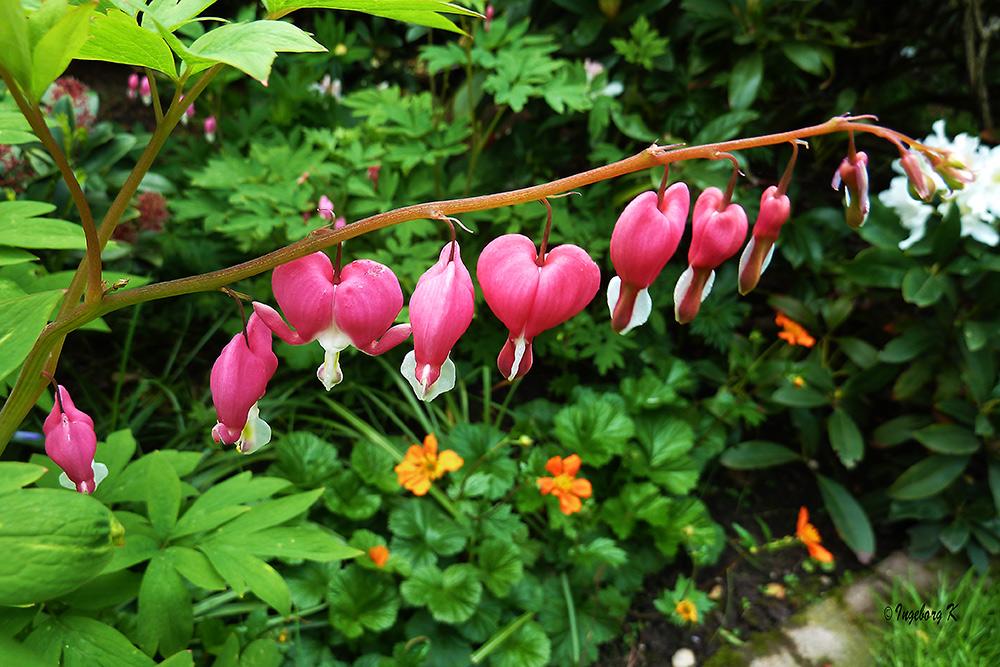 Ein Blumengruß aus meinem Garten