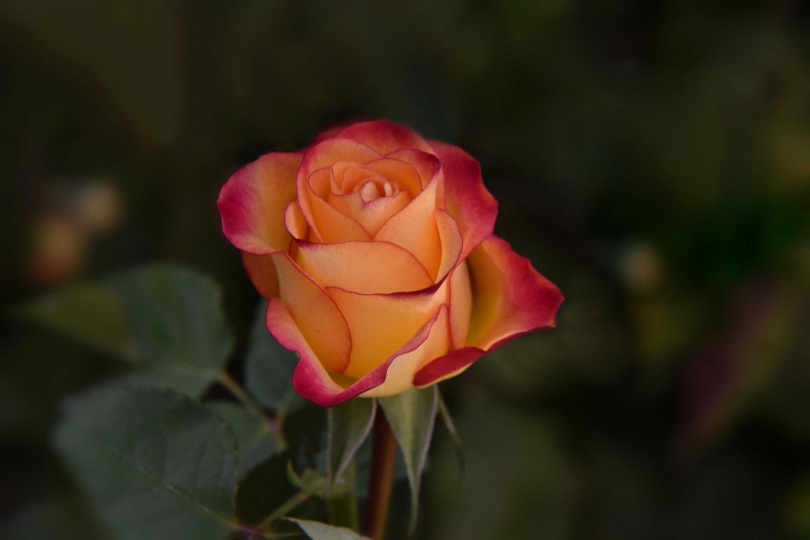 Ein Blumengruß für euch.