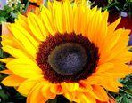 Ein Blumengruß zum Herbstanfang