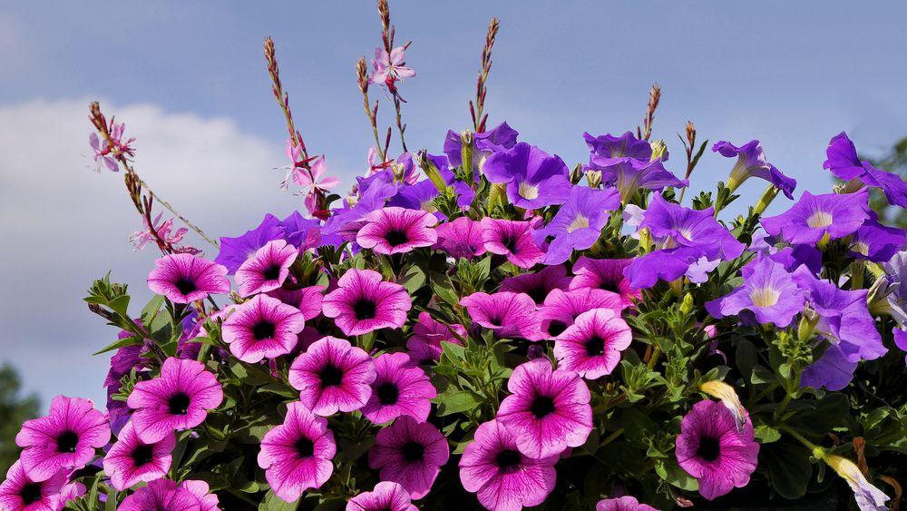 ein Blumengruß zum Sonntag