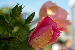 Ein Blumengruß zum Wochenbeginn
