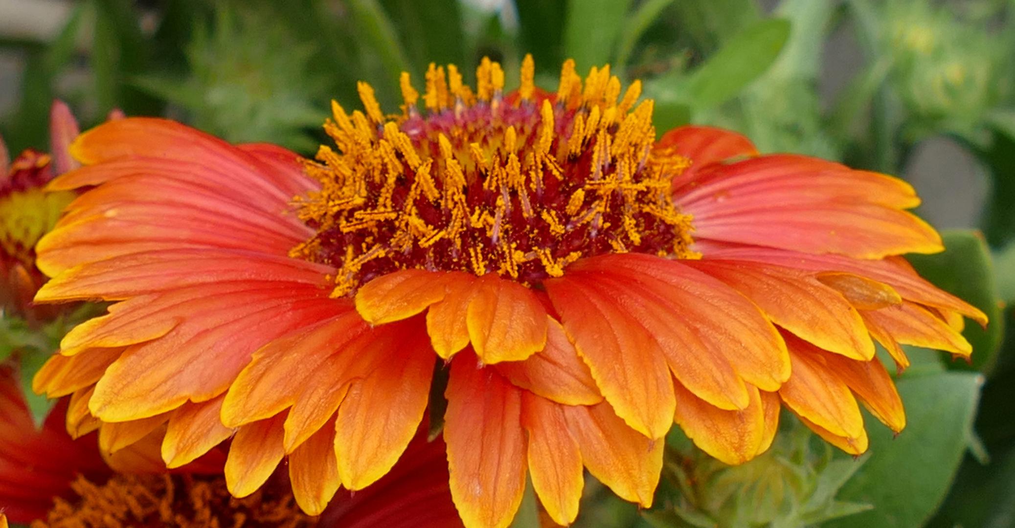 Ein Blumengruß zum Wochenende