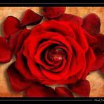 Ein Blumenkuss an alle.......