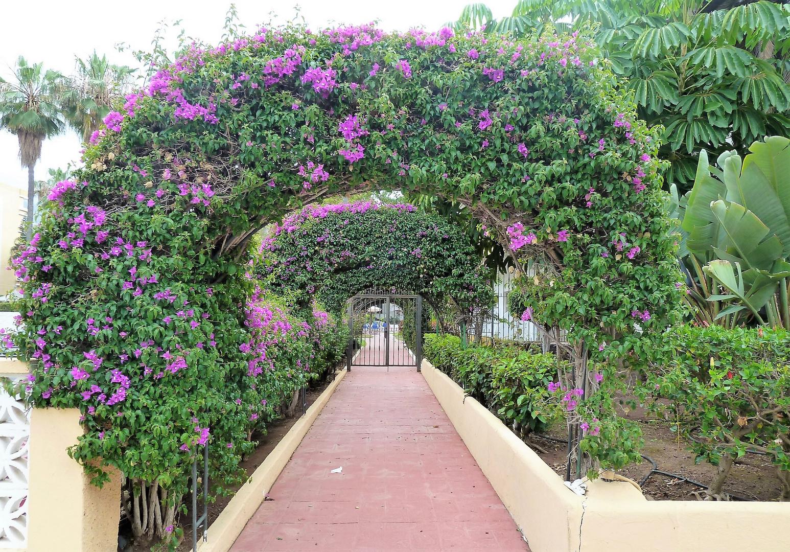 Ein Blumenweg....