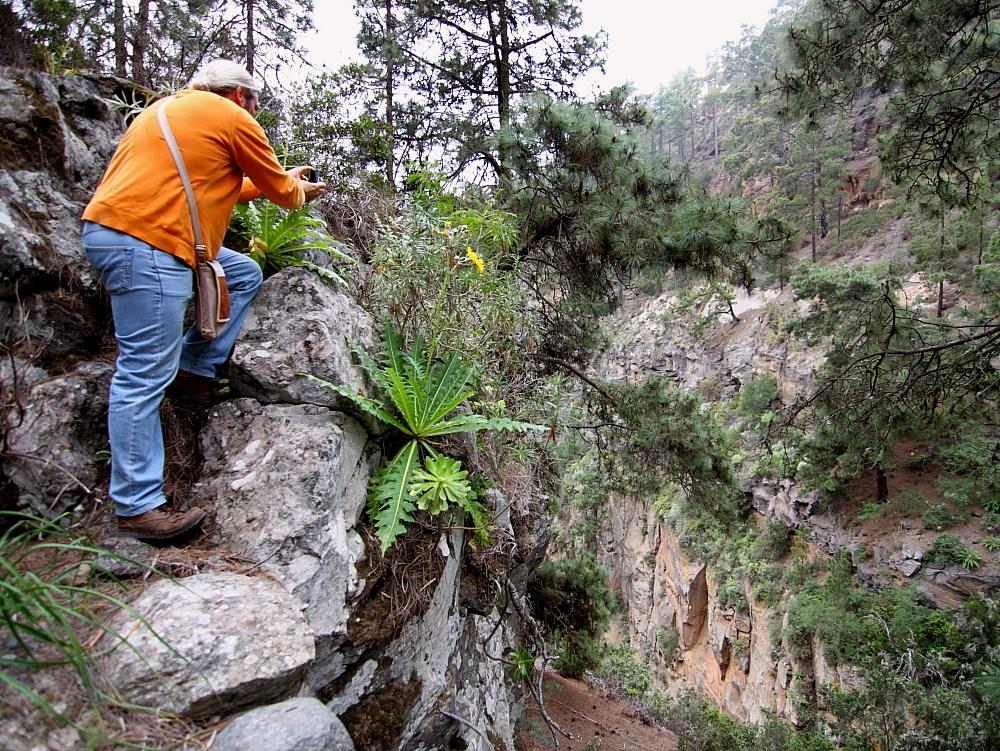 Ein Botaniker in seinem Element