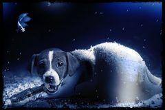 Ein braver Seehund...