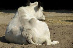 Ein breiter Rücken