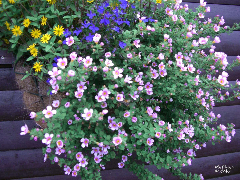 Ein bunter Blumen - Mix