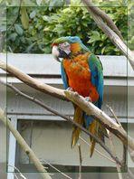 ein bunter Papagei