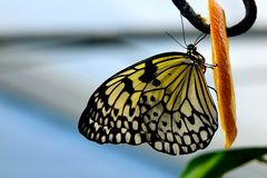 Ein bunter Schmetterling