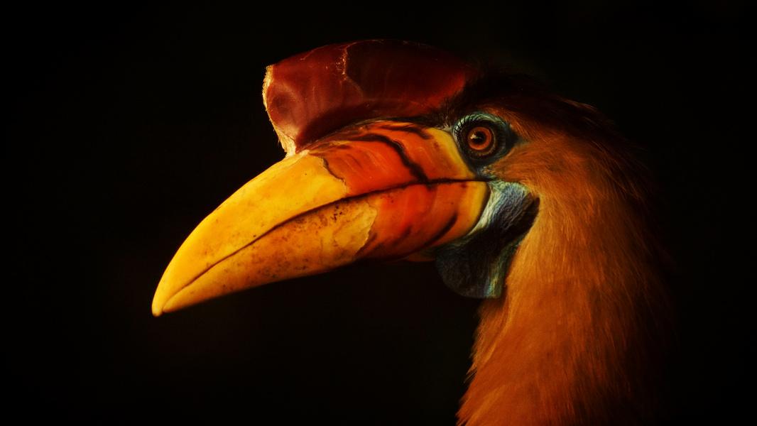 ein bunter Vogel