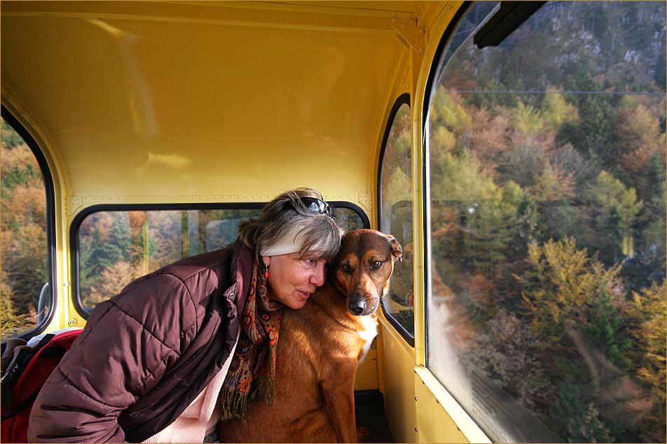 Ein couragierter Hund ;-))
