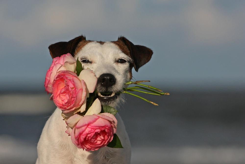 Ein Dankeschön Für Euch Foto Bild Tiere Haustiere Hunde