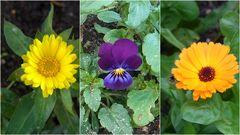 Ein Dezember Blumengruß für ALLE