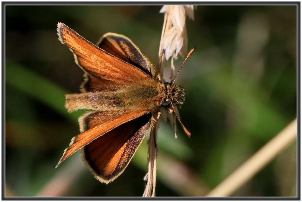 ein Dicker Foto & Bild   natur, tiere, wildlife Bilder
