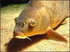 Ein dicker Fisch :-)!