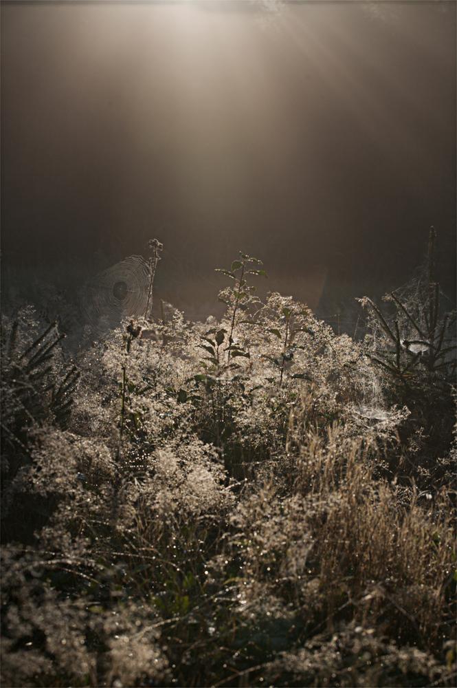 ein düsterer Herbstmorgen