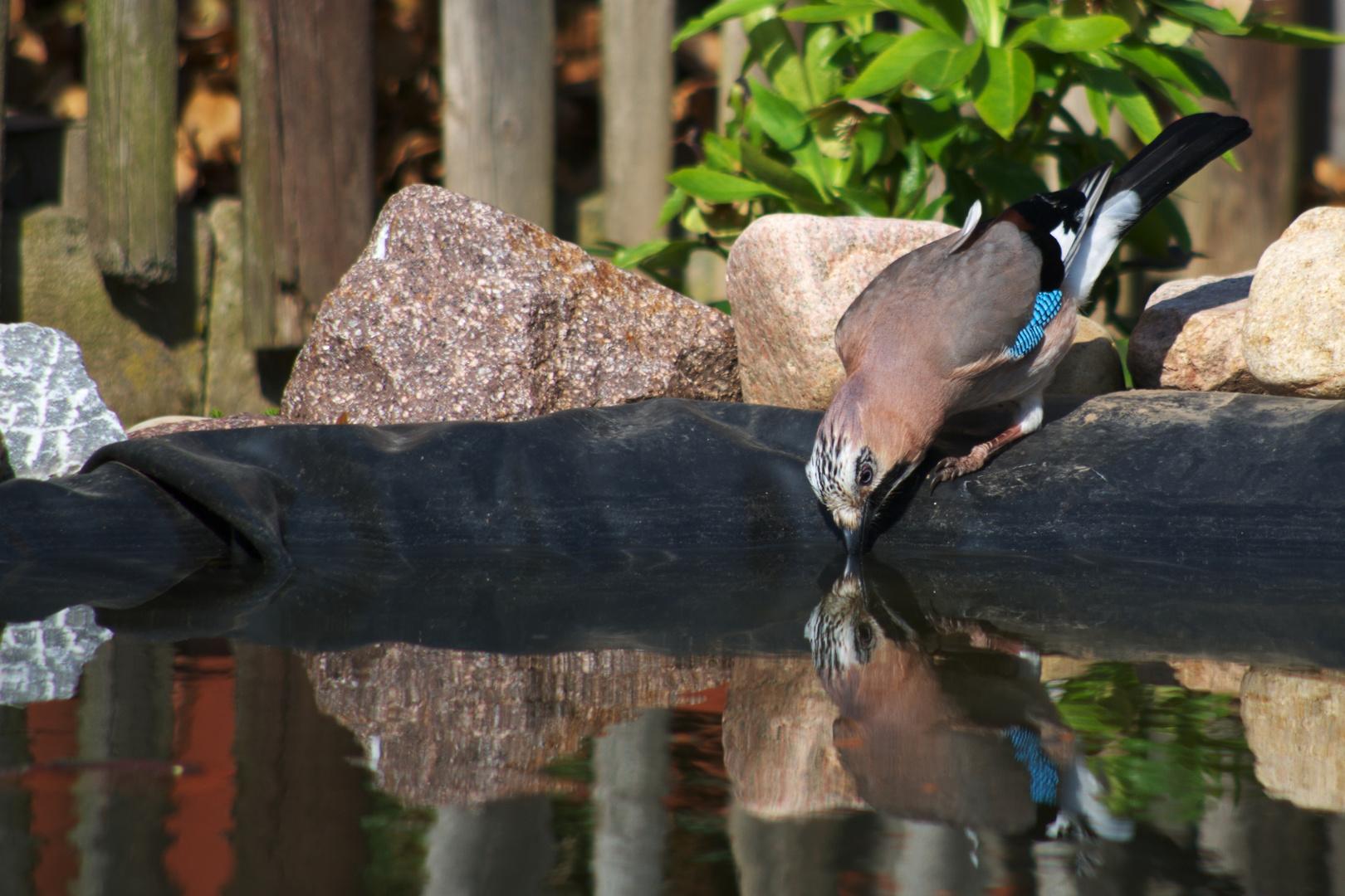 Ein durstiger Vogel