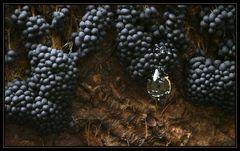 Ein edler Tropfen Badhamia utricularis ... - Mushrooms with a drop