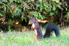 ein Eichhörnchen...