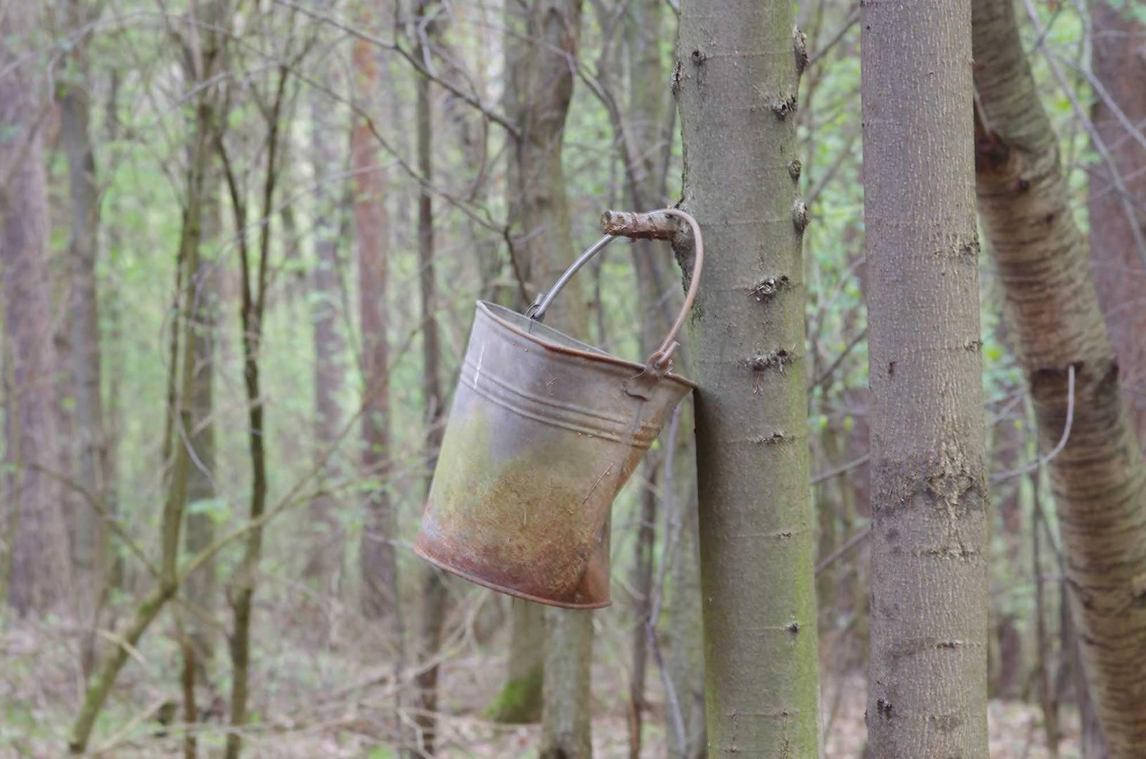 Ein Eimer hängt im Wald
