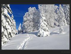 Ein einmaliger Wintertag
