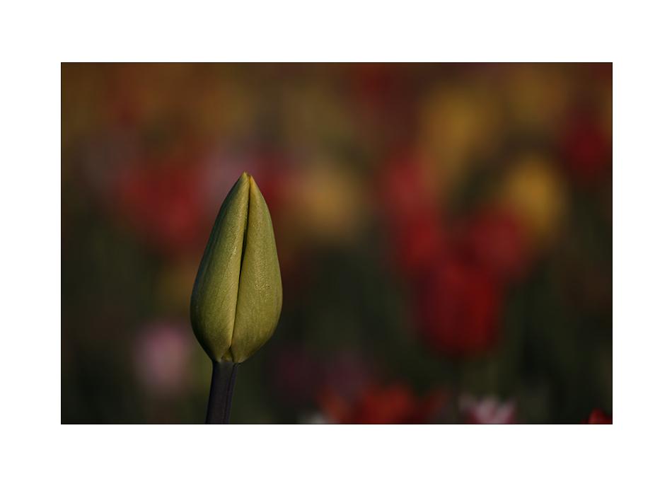Ein einsamer Matrose im Blumenmeer...seufz...