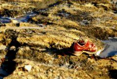 ein einsamer Schuh