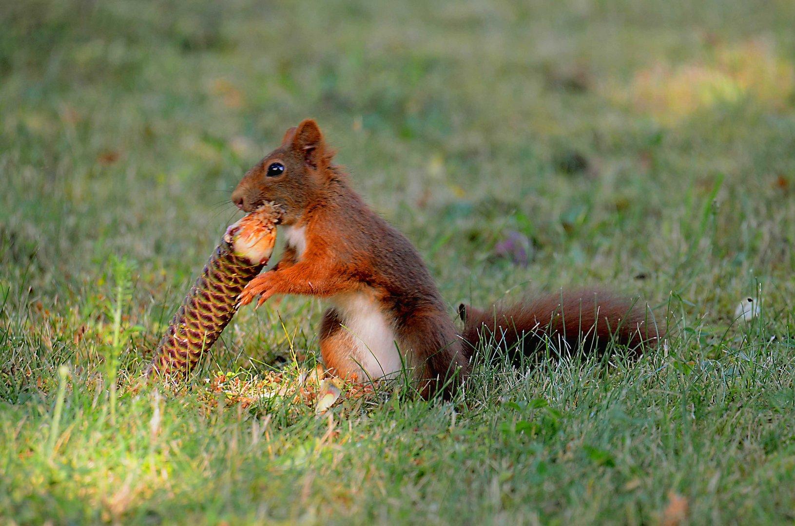 Ein Eis für das Eichhörnchen