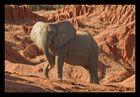 Ein Elefant sieht rot