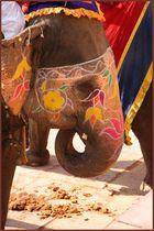 ein Elefant vom Amber Fort / Jaipur